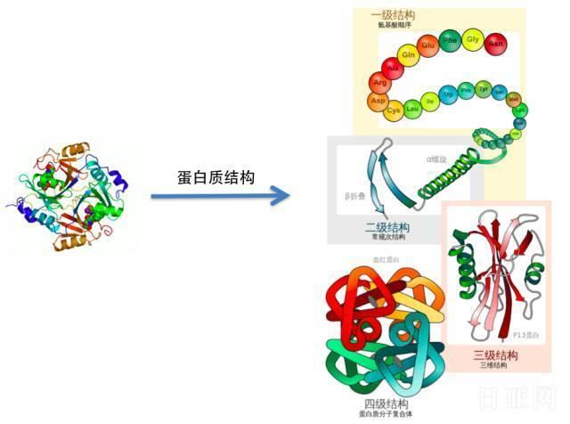 日本酵素是什么,这家伙到底靠不靠谱?