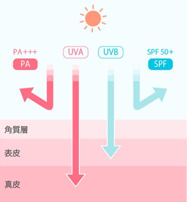 日本海淘防晒霜挑选攻略