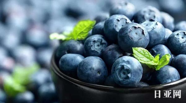 POLA、FANCL、HABA蓝莓护眼丸哪个好