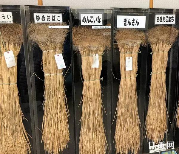 日本大米为什么好吃